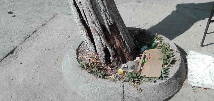 Кој треба да го отстрани дрвото кое претставува опасност за пешаците?