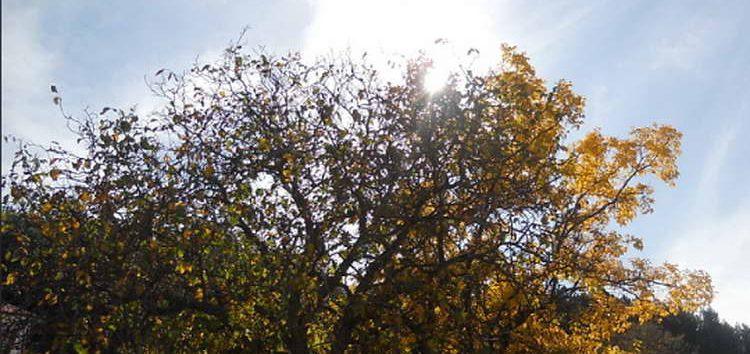 Претпладне сончево, попладне со северен ветер и пад на температурите