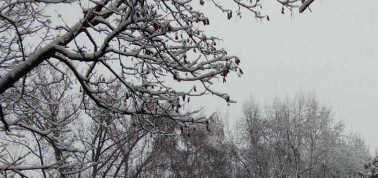 МЗШВ: Не се очекуваат позначителни штети од снегот и студот врз овошките