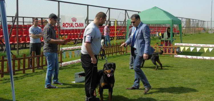 Прилеп домаќин на интернационалната изложба на расни кучиња