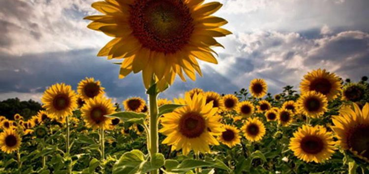 Сончево време со температура до 26 Целзиусови степени