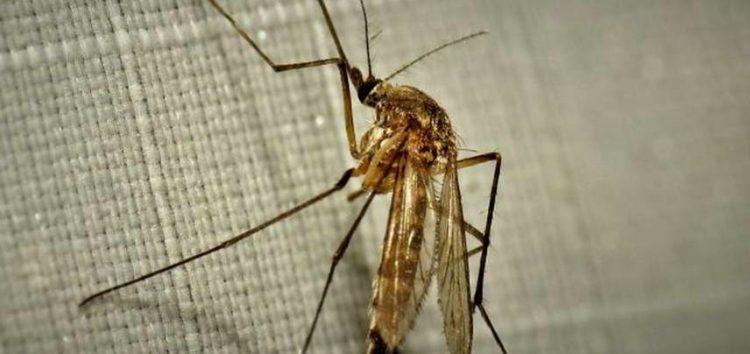 Од петок до понеделник, во Прилеп ќе се прска против комарци