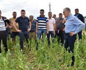 Градоначалникот Јованоски ги посети земјоделските површини со уништени насади од вчерашното невреме