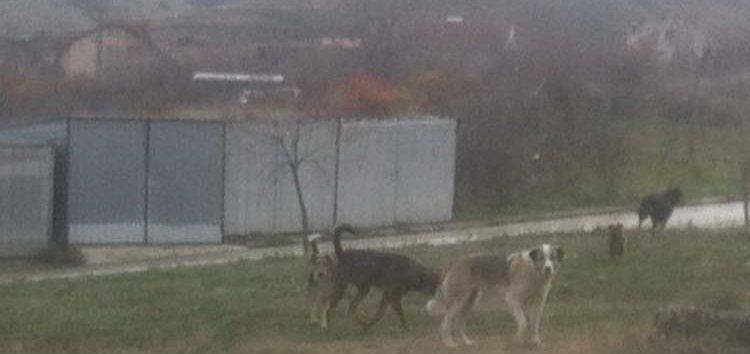 Општина Битола системски ќе го решава проблемот со кучињата скитници