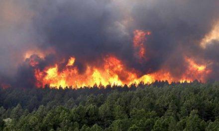 Битола: Пожар го зафати Подпелистерието