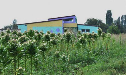 """""""Знаењето е сила, знаењето е моќ"""": Училиште среде поле со тутун, без вода, струја и пристапен пат!"""