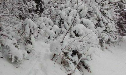 Цела држава под минусни температури, најстудено во Берово, Битола, Маврово