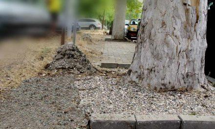 Општина Аеродром ги ослободува заробените дрвја