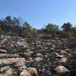 Пожарите кои вчера избувнаа на територијата на општина Прилеп ставени под контрола