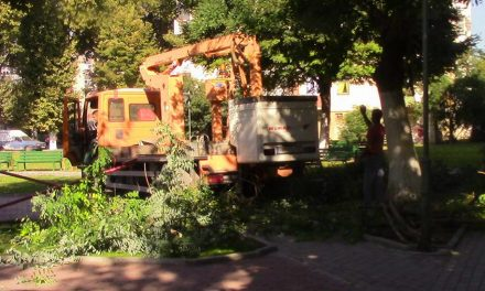"""Прилепски """"Комуналец"""" започна со есенско кастрење и сечење на проблематичните дрвја"""