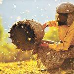 """""""Медена земја"""" испиша историја со две номинации за Оскар, за најдобар документарец и странски филм"""