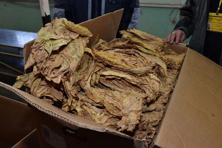 Тутунопроизводителите и откупувачите се договорија – ќе се интензивира откупот на тутун на задоволство на двете страни