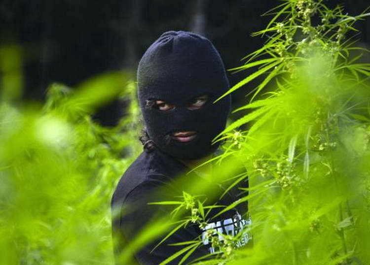 Како марихуаната од Јосифово заврши во Арачиново?