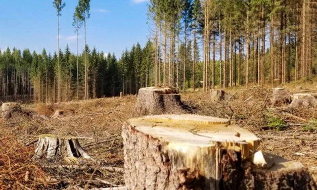 Нелегалната сеча ги пустоши шумите во Северна Македонија