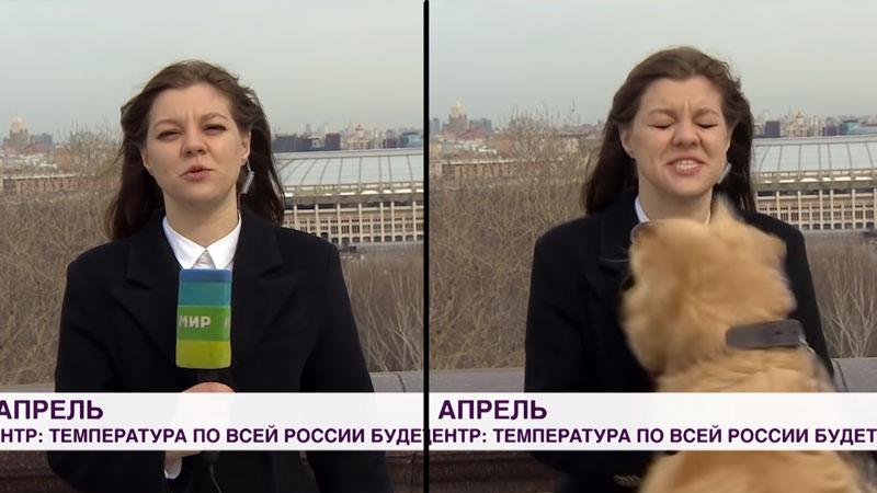 Куче го прекина временскиот извештај на руска телевизија, одземајќи го микрофонот од репортерката