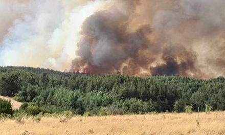 Милионски штети од пожарите, потребни пет децении за обнова на шумите